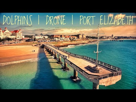 INCREDIBLE DRONE FOOTAGE OF DOLPHINS | PORT ELIZABETH | SOUTH AFRICA