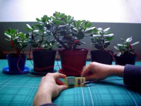 """""""Flower Power"""", extrayendo energía eléctrica de las plantas"""