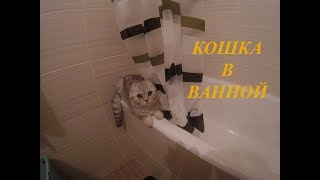 😻Шотландская Вислоухая Кошка в Ванной без Воды Сat in the bathroom Kitten