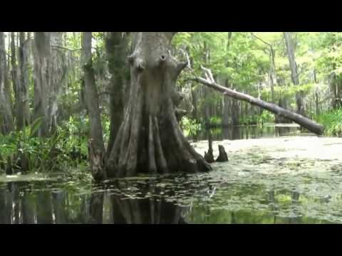 Creedence Clearwater Born on the Bayou