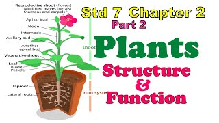 std 7 science chapter 2 Plants - Structure & Function - Part 2 (7th, class 7) explanation in English