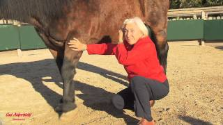 Gut Aiderbichl: Das Geheimnis von Linda Tellington-Jones bei uns thumbnail