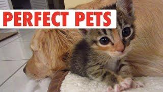 Pets Who Don