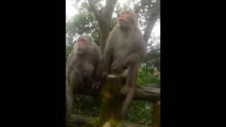20130331-猴子打手槍