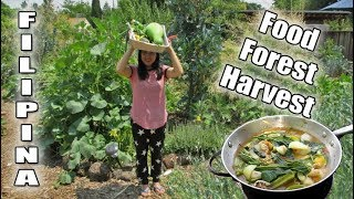 Filipina Harvests Fresh Produce From The Backyard FOOD FOREST And Makes A Garden Soup (Bulanglang)