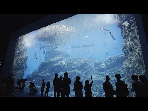 Tohoku Japan Trip-Sendai Umi no mori Aquarium in Miyagi Prefecture
