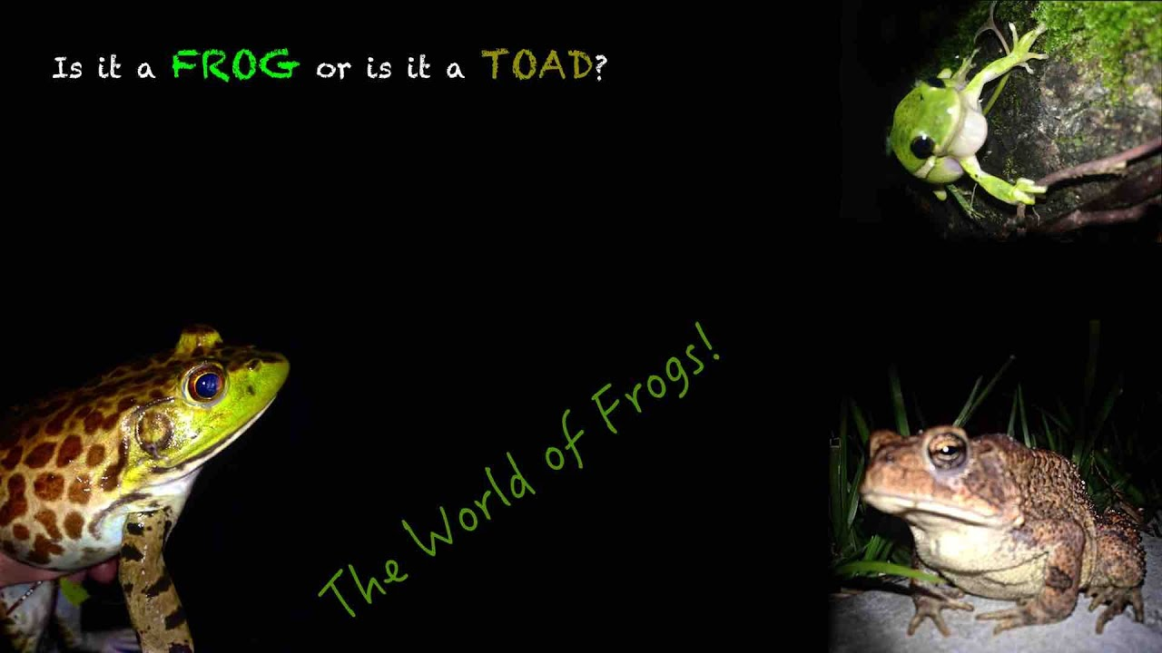 The Difference Between Frogs and Toads - YouTube