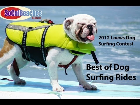 2012 Loews Dog Surfing Contest Best of Dog Surf Rides