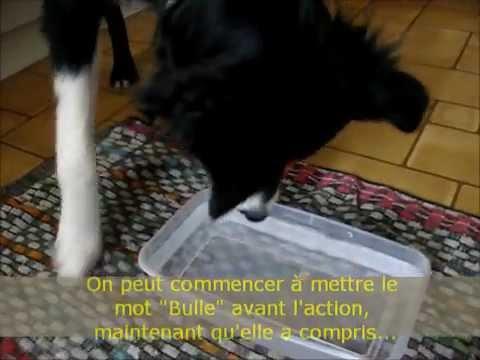 comment apprendre mon chien faire des bulles dans l. Black Bedroom Furniture Sets. Home Design Ideas