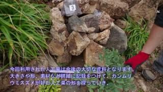 神子元島で取り組んでいるカンムリウミスズメの人工巣の設置事業がつい...
