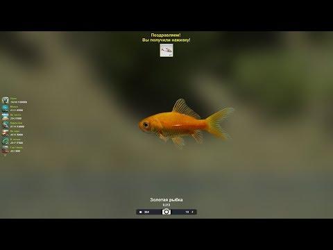 Золотая рыбка, уловистое место, в игре, Трофейная рыбалка 2