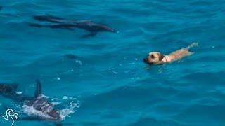 だっていっしょに泳ぎたいんだ!青い青いバハマの海で、イルカの群れと泳ぐ犬