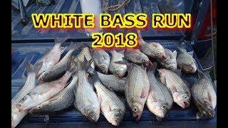 WHITE BASS RUN 2018 - w/ Giant Crappie and Largemouth Bass - #bassfishing #whitebassrun