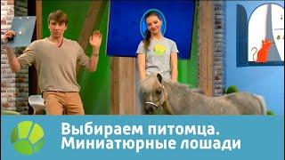 Выбираем питомца с Алексеем Ягудиным. Миниатюрные лошади