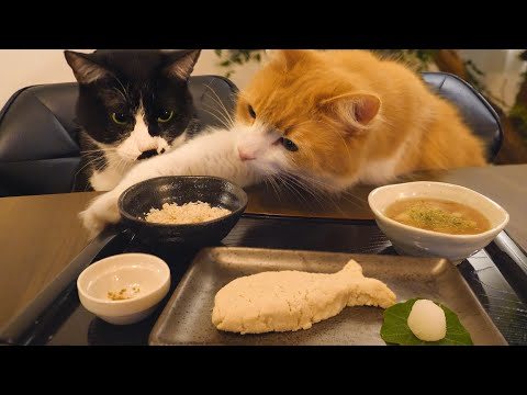 Japanese meal for cats