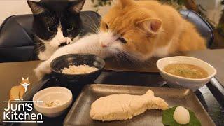 Carne japonesa para gatos