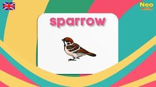 САМАЯ БЫСТРАЯ ПТИЦА Английский для детей ПТИЦЫ на английском Самая быстрая птица
