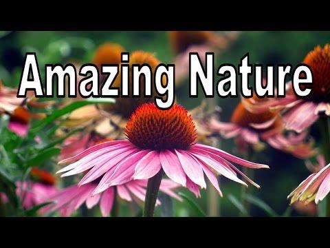 Amazing Nature Photos With Accordion Music (Original Content) HD
