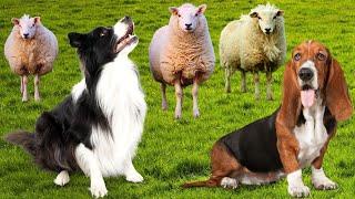Top 10 Best Farm Dog Breeds Ever