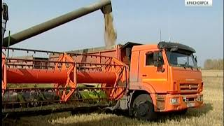 Аграрии Красноярского края практически завершили уборку зерна с полей