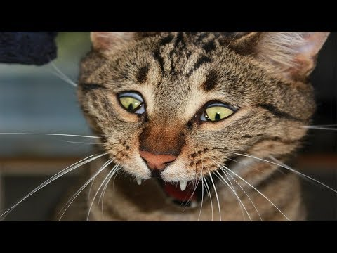 Scared Cats - Funny Scared Cats Compilation Part 4