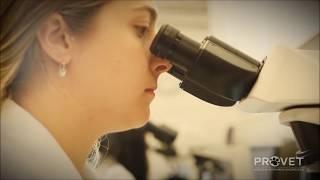 Vídeo Institucional Provet - Medicina Veterinária Diagnóstica