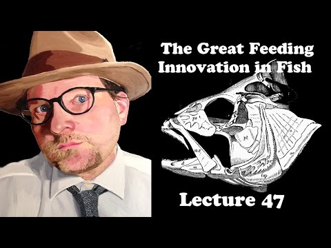 Lecture 47 The Great Feeding Innovation In Fish
