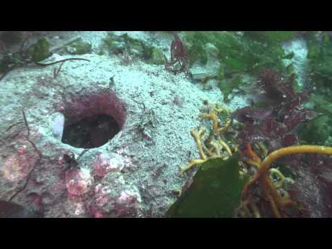 Scuba Diving Puget Sound at Edmonds, WA