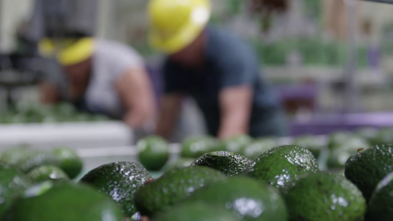 Food Safety - West Pak Avocado Inc