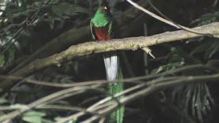 Quetzal Ave Rara Espiritual Sagrada Maias e Astecas - Música Intrumental Relax para Alma