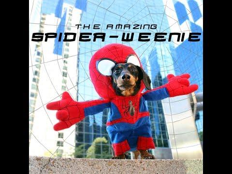 The Amazing Spider-Weenie!