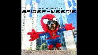 The Amazing Spider-Weenie! thumbnail