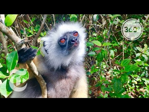 52 Places to Go: Madagascar | The Daily 360 | The New York Times