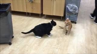 An example of normal feline play behavior