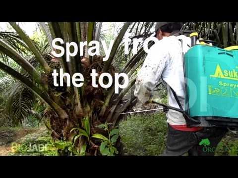 how-to-spray-biojadi-using-a-backpack-sprayer