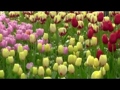 Worlds most beautiful amazing flower garden keukenhof holland 2014 worlds most beautiful amazing flower garden keukenhof holland 2014 mightylinksfo
