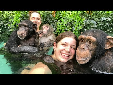 POOL TIME with CHIMPANZEES and MONKEY!