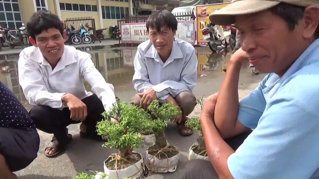 SH.1275.Báo giá các loại cây cảnh phong phú tại chợ Thị xã Sơn Tây. Hà nội.
