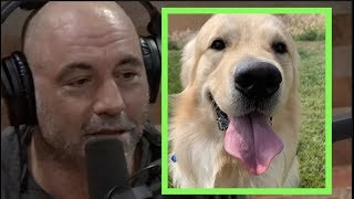 Joe Rogan - My Dog Could Probably Kill Me If He Wanted To