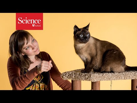 Cats rival dogs on many tests of social smarts  But is