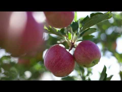 Climate Smart Farming: Apple Growers