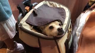 강아지만두 - 송파CGV 에서