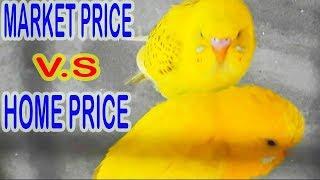 MARKET AUR GHAR K BIRDS KI PRICES MAIN DIFFERENCE | URDU/HINDI