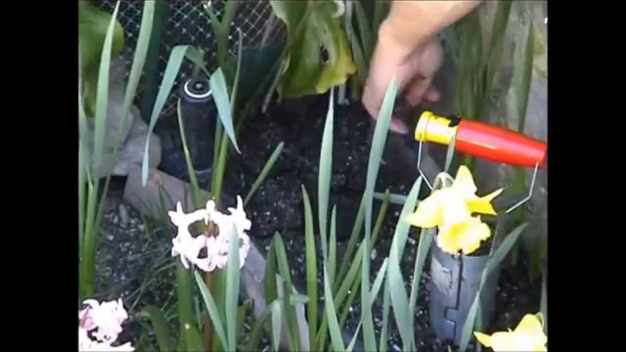 RIBILAND 03188/ /Plantador de bulbos autom/ático Plata