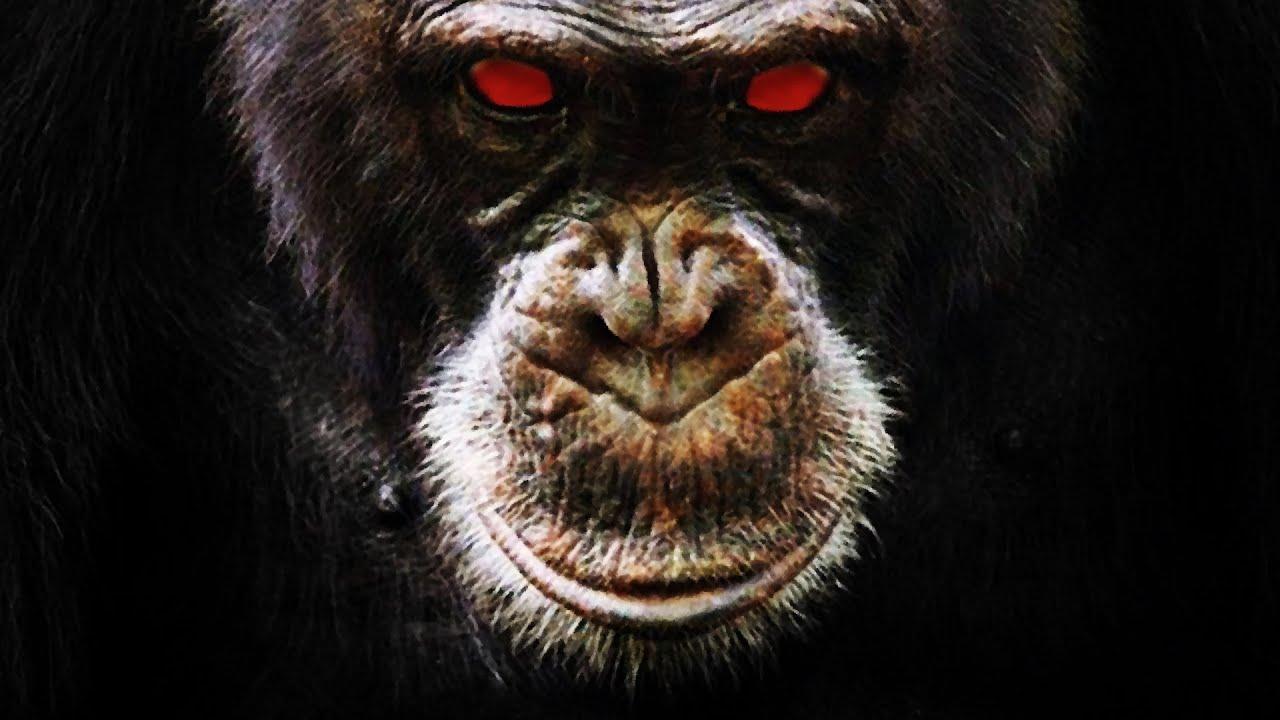 BRUTAL Ataque de un Chimpancé | Sobrevive a Pesar de Perder el ROSTRO