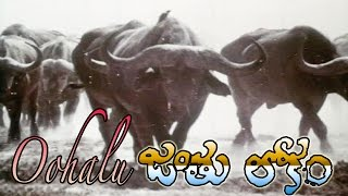 Oohalu Song from Jantulokam Telugu Movie | By Henz Simon
