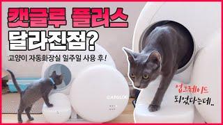 고양이 자동화장실 캣글루 플러스 일주일 사용기! (쿠키…