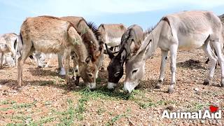 Baby donkey rescued with gaping hole in forehead