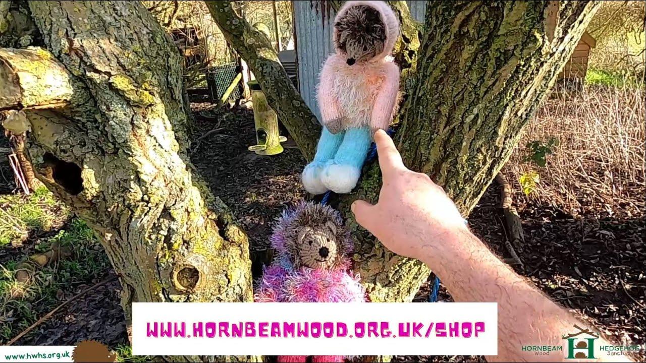 Hedgehogs Need Fostering! - Hornbeam Wood Hedgehog Sanctuary