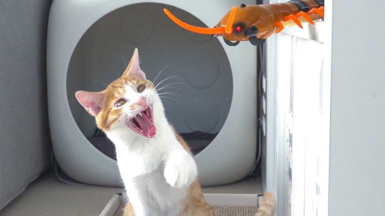 아기고양이 토토의 하찮은 폭력성